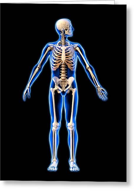Biomechanical Greeting Cards - Male Skeleton, Artwork Greeting Card by Roger Harris