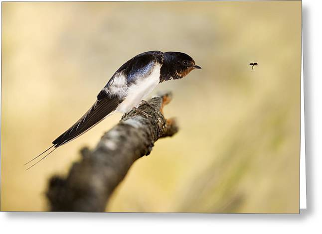 Male Swallow Greeting Card by Power And Syred