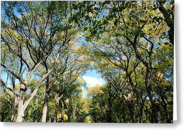 Natral Greeting Cards - MALL of TREES Greeting Card by Rob Hans