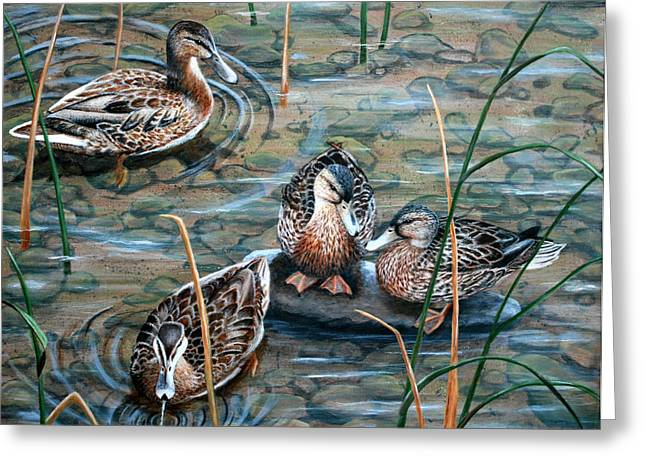 Mallard Paintings Greeting Cards - Mallards Greeting Card by Brenda Baker