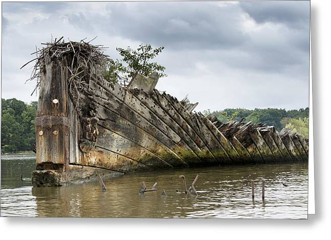 Mallow Greeting Cards - Mallows Bay Ship Graveyard - Maryland Greeting Card by Brendan Reals