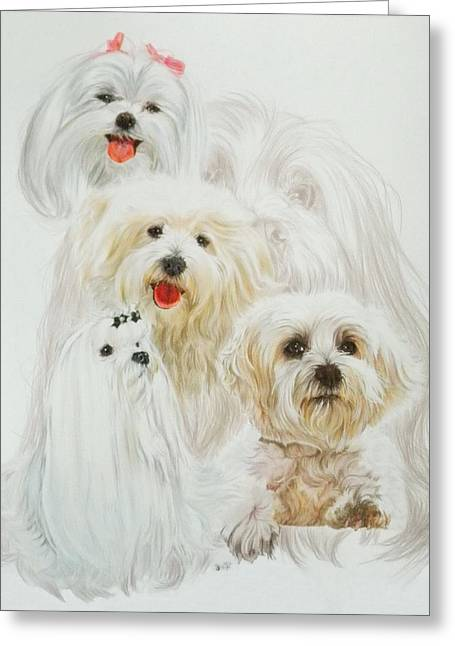 Toy Maltese Mixed Media Greeting Cards - Maltese w/Ghost Greeting Card by Barbara Keith