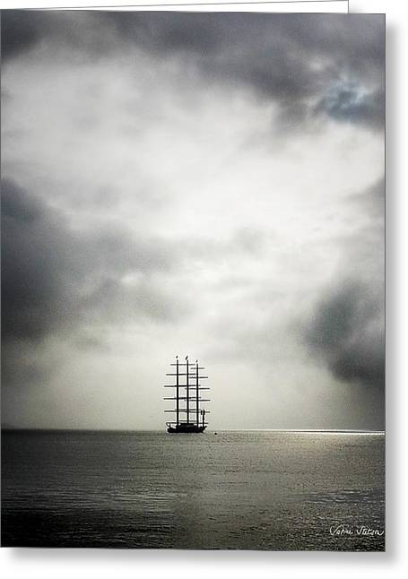 Sabine Stetson Photographs Greeting Cards - Maltese Falcon Greeting Card by Sabine Stetson