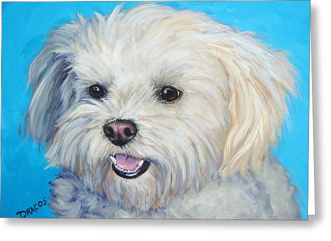 Maltese Dogs Greeting Cards - Maltese in Sunlight Greeting Card by Dottie Dracos