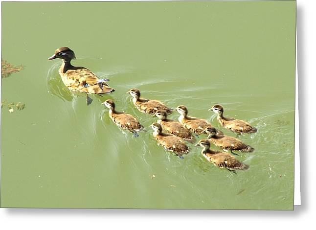 Dry Brush Greeting Cards - Mama Duck and Ducklings Greeting Card by James Granberry