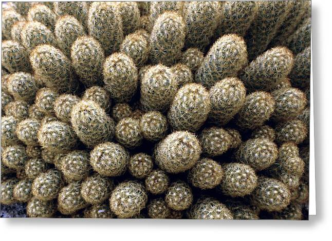 Lady Fingers Greeting Cards - Mammillaria Elongata Greeting Card by Vaughan Fleming