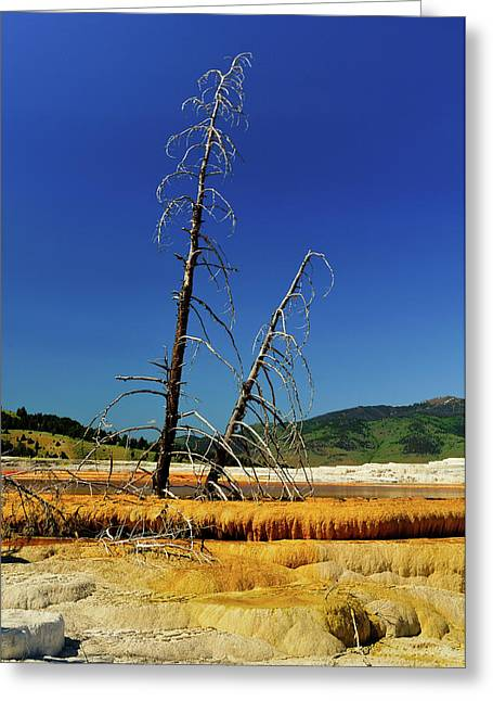 Mammoth Terrace Greeting Cards - Mammoth Hot Springs Greeting Card by Greg Norrell