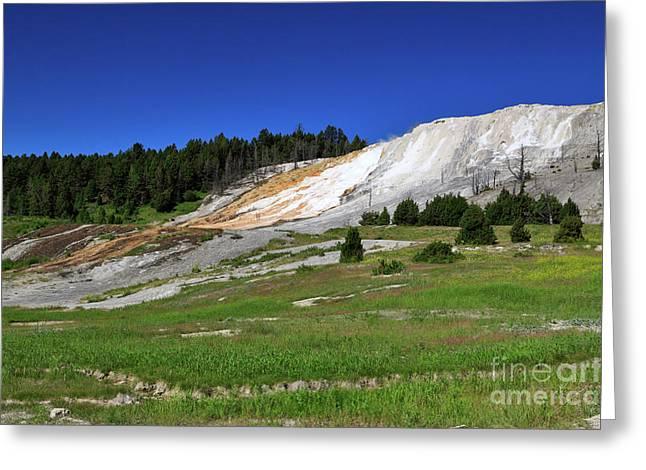 Mammoth Terrace Greeting Cards - Mammoth Hot Springs Lower Terrace Greeting Card by Louise Heusinkveld