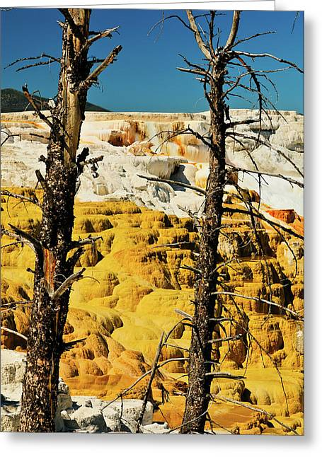 Mammoth Terrace Greeting Cards - Mammoth Upper Terrace Greeting Card by Greg Norrell