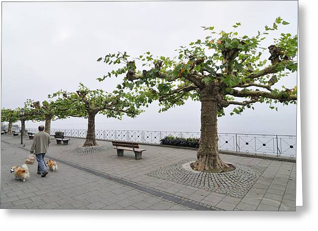 Dog In Lake Greeting Cards - Man with dog walking on empty promenade with trees Greeting Card by Matthias Hauser