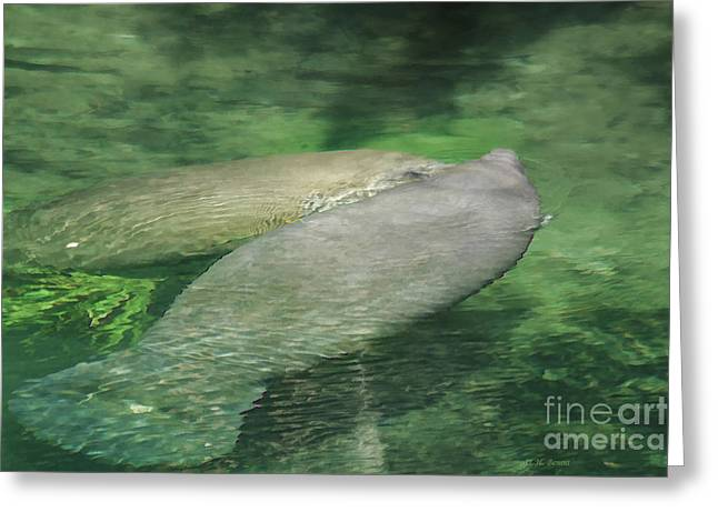 Manatee Springs Greeting Cards - Manatee Pair Greeting Card by Deborah Benoit