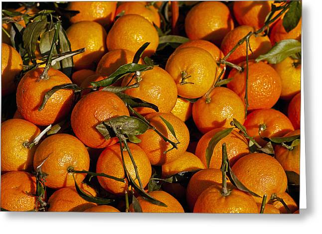 Citrus Fruit Greeting Cards - Mandarins Greeting Card by Joana Kruse