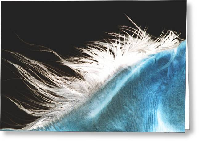 Horse Portrait Photographs Posters Greeting Cards - Mane Beauty Greeting Card by El Luwanaya Arabians