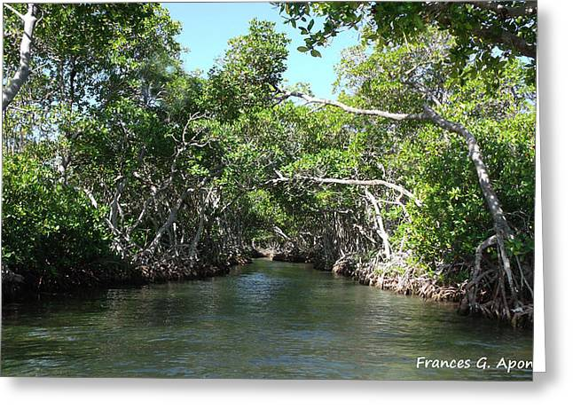 Best Sellers -  - Mangrove Forest Greeting Cards - Mangrove Forest Greeting Card by Frances G Aponte