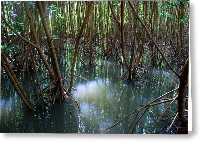 Best Sellers -  - Mangrove Forest Greeting Cards - Mangrove forest Greeting Card by Perry Van Munster