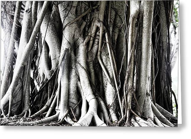 Mangrove Tentacles  Greeting Card by Douglas Barnard