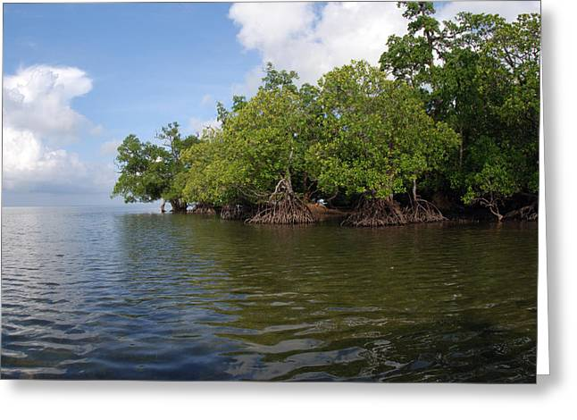 Mangrove Trees Greeting Cards - Mangroves A The Edge Of A Small Island Greeting Card by Darlyne A. Murawski