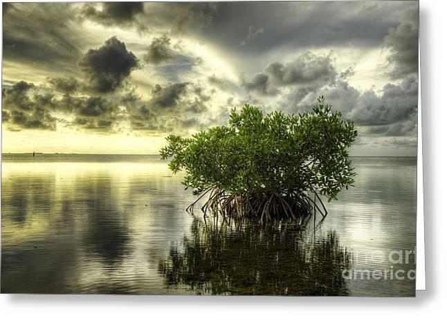 Mangroves I Greeting Card by Bruce Bain