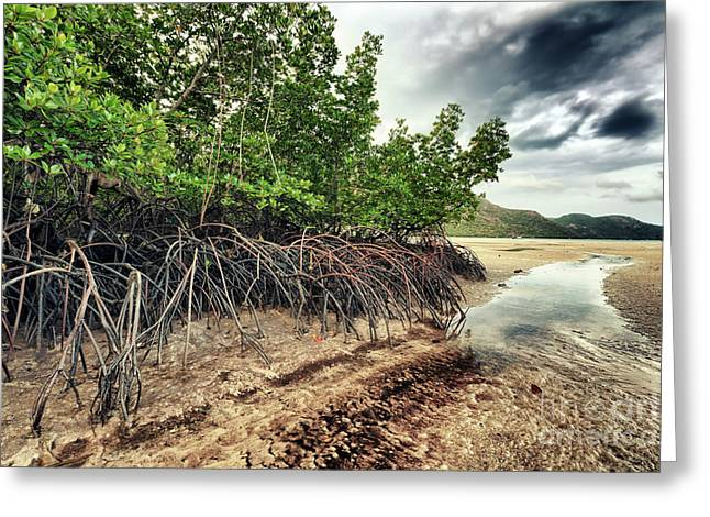 Peaceful Scene Greeting Cards - Mangroves Greeting Card by MotHaiBaPhoto Prints