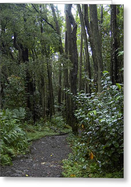 Manoa Falls Greeting Cards - Manoa Falls Hiking Trail In Honolulu Greeting Card by Stacy Gold