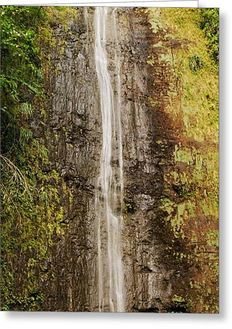Manoa Falls Greeting Cards - Manoa Falls Greeting Card by Michael Peychich
