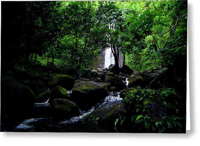 Manoa Falls Greeting Cards - Manoa Falls Stream Greeting Card by Kevin Smith