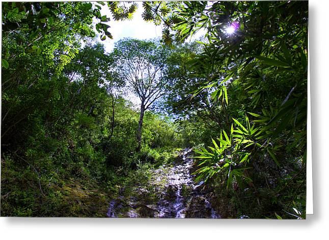 Manoa Falls Greeting Cards - Manoa Rainforest Skylight Greeting Card by Kevin Smith