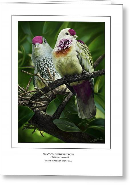Tonga Greeting Cards - Many-colored Fruit Dove Greeting Card by Owen Bell