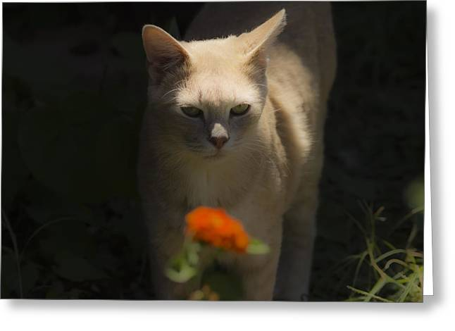 Kim Henderson Greeting Cards - Many Moods of Kitty Greeting Card by Kim Henderson
