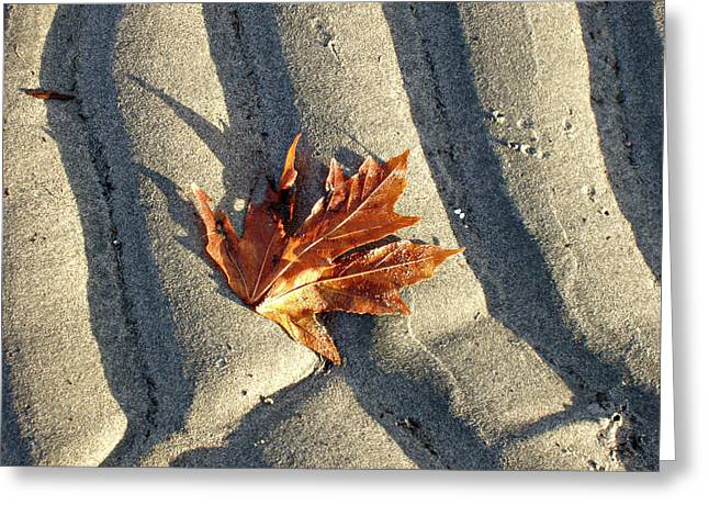 Sienna Greeting Cards - Maple Leaf Forever Greeting Card by Marilyn Wilson