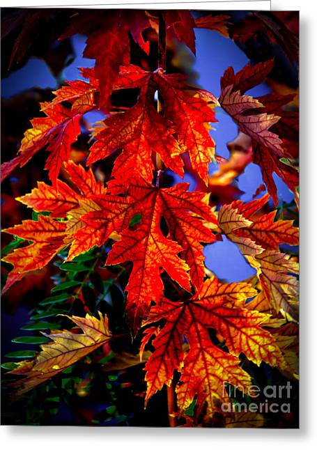 Maple Photographs Greeting Cards - Maple Leaves Greeting Card by Robert Bales
