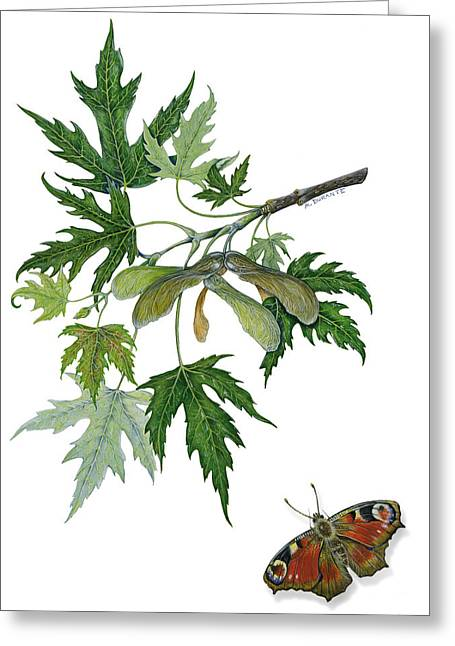 Naturalistic Pastels Greeting Cards - Maple Greeting Card by Marina Durante