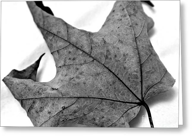 Maple Photographs Greeting Cards - Maple Greeting Card by Perry Webster
