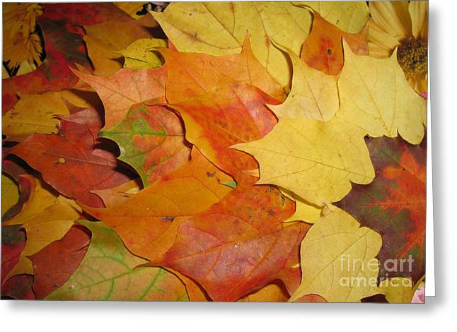Glass Wall Greeting Cards - Maple Rainbow Greeting Card by Ausra Paulauskaite