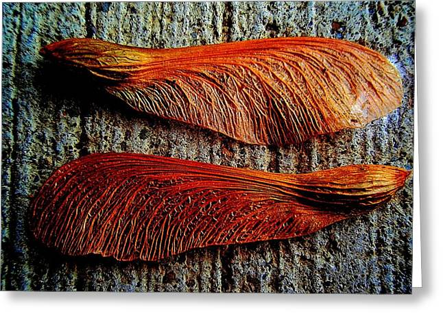 Whirlygig Greeting Cards - Maple Seed Pair Greeting Card by Beth Akerman