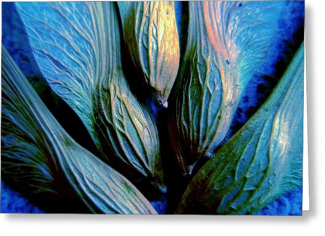 Whirlygig Greeting Cards - Maple Seeds in Blue Greeting Card by Beth Akerman