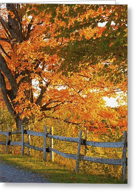 Maple Trees And A Rail Fence In Autumn Greeting Card by David Chapman