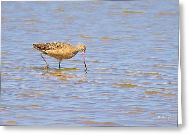 Wildlife Genre Greeting Cards - Marbled Godwit Searching For Food Greeting Card by Roena King