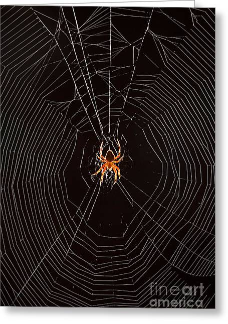 Marbled Orb Weaver Greeting Cards - Marbled Orb Weaver Spider Greeting Card by Ted Kinsman