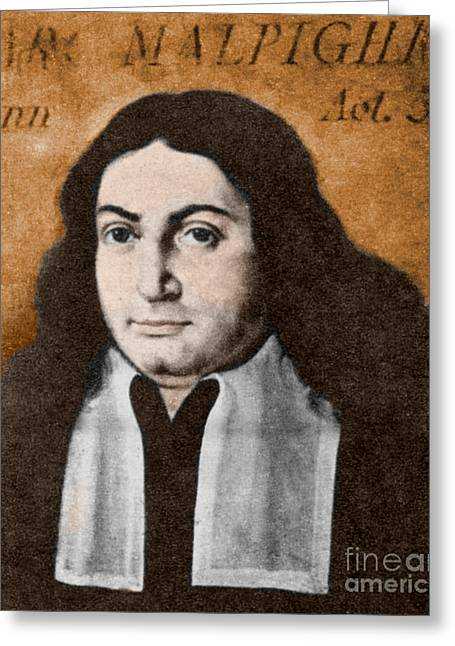 1628 Greeting Cards - Marcello Malpighi, Italian Biologist Greeting Card by Science Source