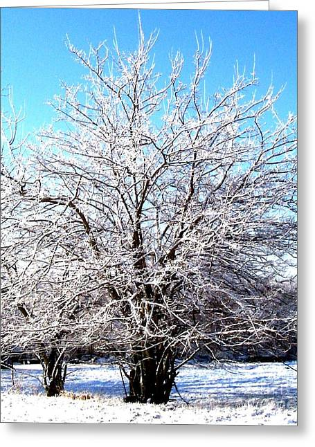Wrapped Canvas Greeting Cards - March Tree Greeting Card by Marsha Heiken