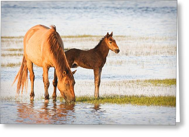 Mare and Foal Greeting Card by Bob Decker