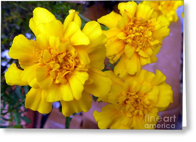 Marigold 3 Greeting Card by Alys Caviness-Gober
