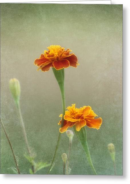 Close Focus Floral Greeting Cards - Marigold Fancy Greeting Card by Kim Hojnacki