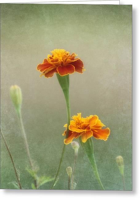 Hojnacki Photographs Greeting Cards - Marigold Fancy Greeting Card by Kim Hojnacki