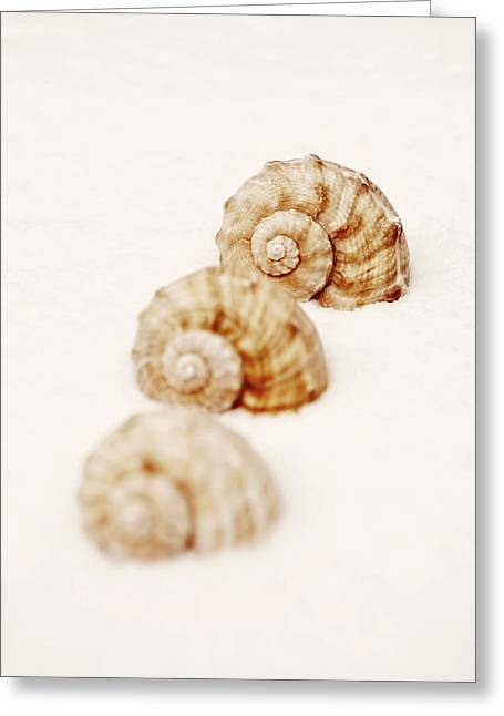 Sea Animals Greeting Cards - Marine Snails Greeting Card by Joana Kruse