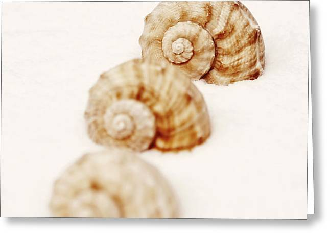 marine snails Greeting Card by Joana Kruse