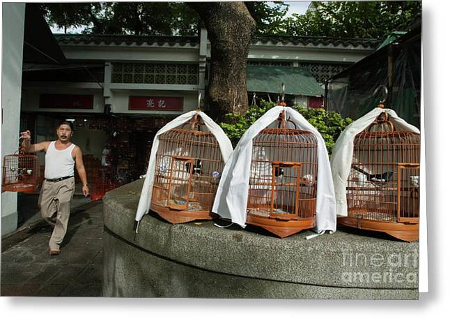 Confined Greeting Cards - Market vendor selling caged birds Greeting Card by Sami Sarkis
