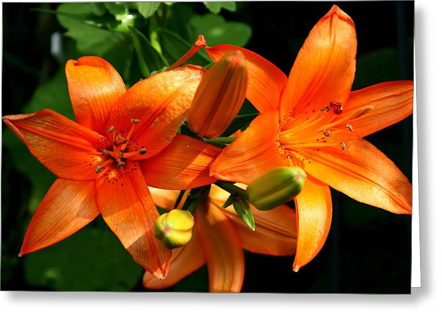 Florals Greeting Cards - Marmalade Lilies Greeting Card by David Dunham