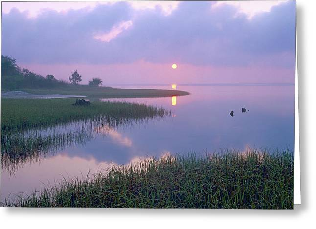Marsh At Sunrise Over Eagle Bay St Greeting Card by Tim Fitzharris